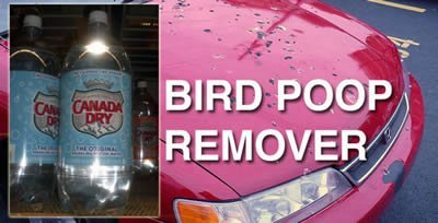 club soda cleans bird poop off cars